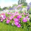 10 Популярних рослин для сонячної клумби