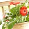 15 Кімнатних рослин, що поліпшують повітря