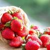 6 Кращих ремонтантних сортів суниці садової