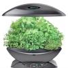 6 Розумних пристроїв для вирощування зелені на підвіконні