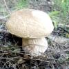 А у нас в лісі грибочки, а у вас?