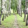 Алеї і рядові посадки дерев