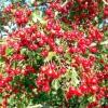 Аритмія - лікування травами, рецепти