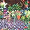 Балконні квіти