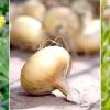 Боротьба з шкідниками рослинними засобами