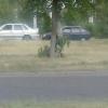 Що робити з обламаними гілками на деревах