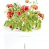 Click & grow: електроніка в садівництві
