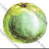Cтекловідность яблук