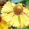 Квітник: рослини другого плану