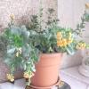 Квіти в будинку- це краса і затишок !!!