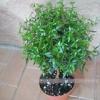 Декоратівнолістниє і красивоцветущие рослини