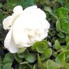 Довгоочікувані квіти