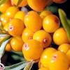 Гастрит - лікування травами, рецепти
