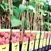Купуємо саджанці плодових дерев і ягідних кущів: де, як і які