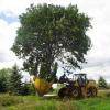 Грамотна пересадка лісових декоративних дерев, великомірні дерева час пересадки, особливості