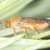 Гусениці на сосні: як боротися