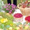 Холецистит, хронічний холецистит, лікування травами, народні рецепти