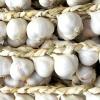 Зберігання часнику та цибулі: народні способи