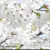 Яблуня: посадка, догляд, розмноження, сорти