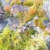 Етюди. весняне натхнення
