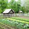 """Як краще """"город городити"""": ідеї та поради від практиків"""