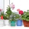 Як правильно вибрати рослини для північних вікон та інших сторін світу