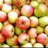 Як стерилізувати, зберегти яблука і для чого