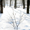 Як захистити дерева від сонячних опіків