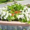 Клумби і квітники - в чому різниця