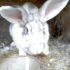 Кролівництво як варіант вигідного бізнесу в домашніх умовах
