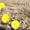 Гортаємо народний календар: кінець березня - початок квітня
