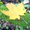 Гортаємо народний календар: перший тиждень жовтня