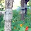Сад: сезонні роботи в серпні