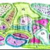 Миксбордер в зелених і пурпурно-фіолетових тонах