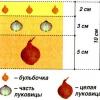 Багатоярусна посадка овочів, як правильно