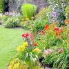 Багаторічні квіти для літньої клумби