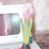 Мої кімнатні рослини