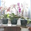 Мої орхідеюшкі!