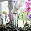 Моє квіткове вікно)