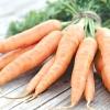 Морква: посадка і догляд