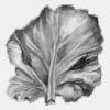 На капусті з'явився сірий наліт, як врятувати капусту