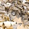 Народні засоби боротьби з гризунами-шкідниками