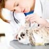 Необхідні щеплення, які можуть врятувати життя кроликам