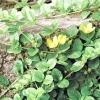 Нижній ярус тінистого квітника