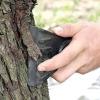 Очищення і побілка стовбурів плодових дерев