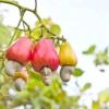 Овочі, які не можуть рости поряд