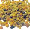 Бджолиний пилок, квітковий пилок, пилок-обніжжя - лікувальні властивості, рецепти