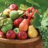 Плодові та ягідні культури