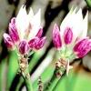 Грунтова суміш для посадки рододендрона
