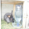 Поїлки і автопоїлки для кроликів - робимо своїми руками
